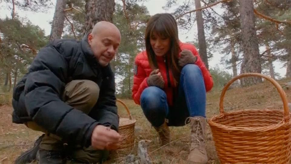 El Encantador de Setas: Níscalos y llanegas en Navacerrada
