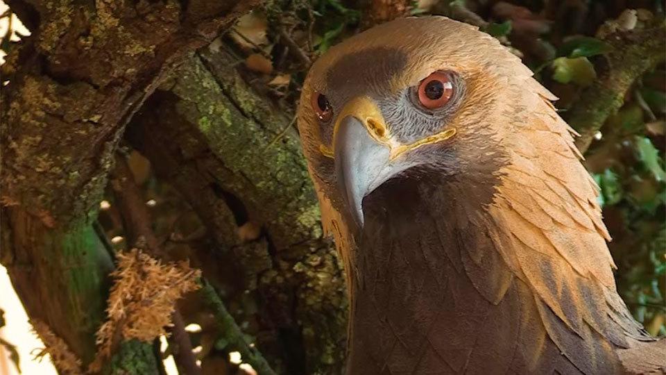 Centro de Interpretación El Águila