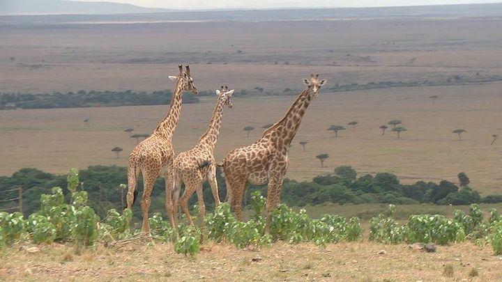 Kenia, la fauna más bella del mundo