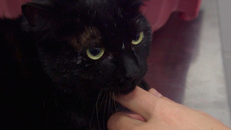 Animalia: Sasha y sus problemas estomacales