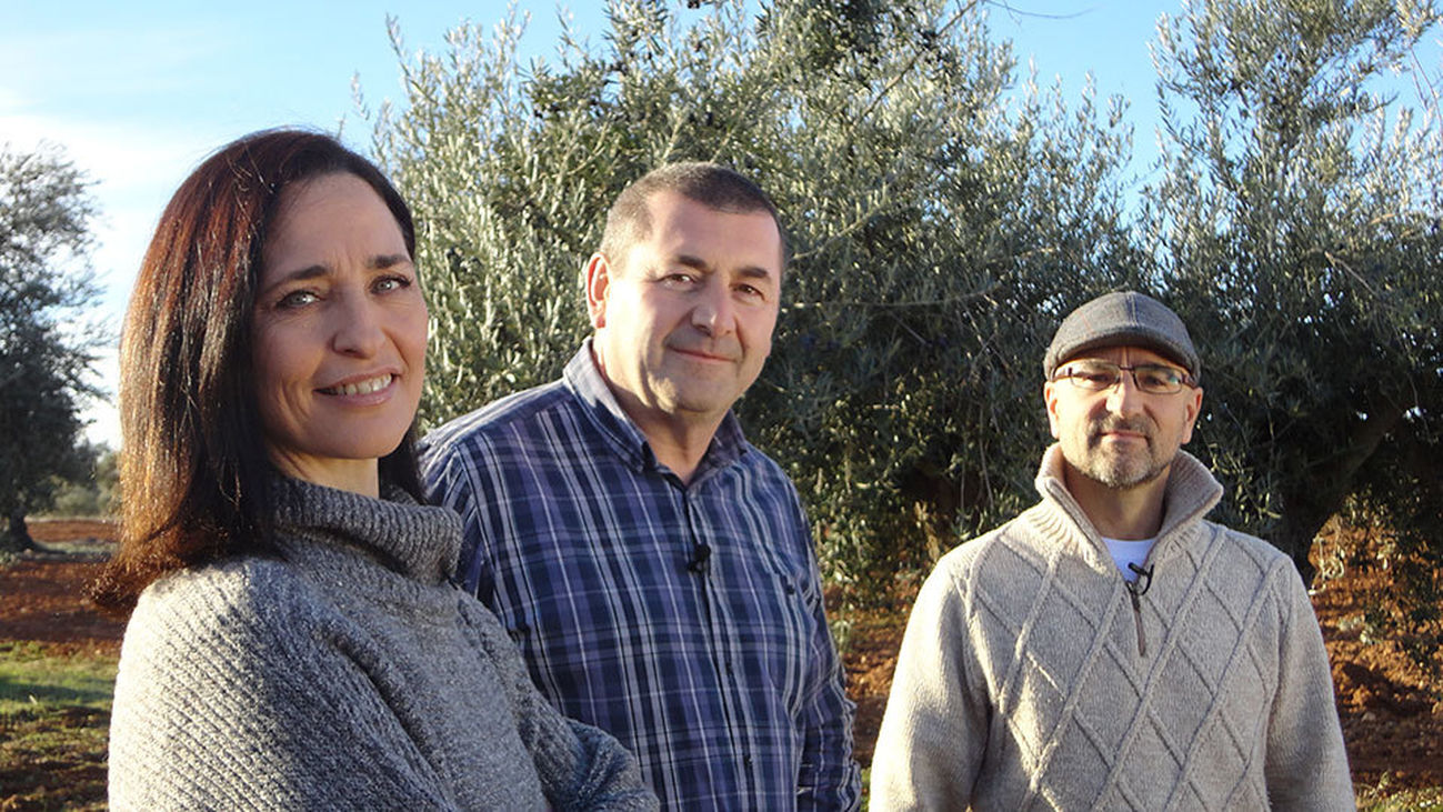 D Origen Madrid: El aceite de oliva
