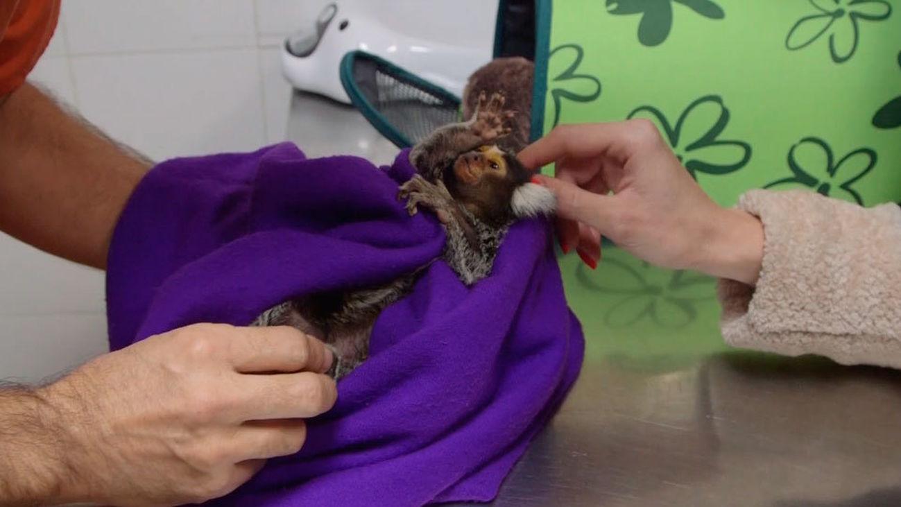 Animalia: Willy tiene que pasar por quirófano