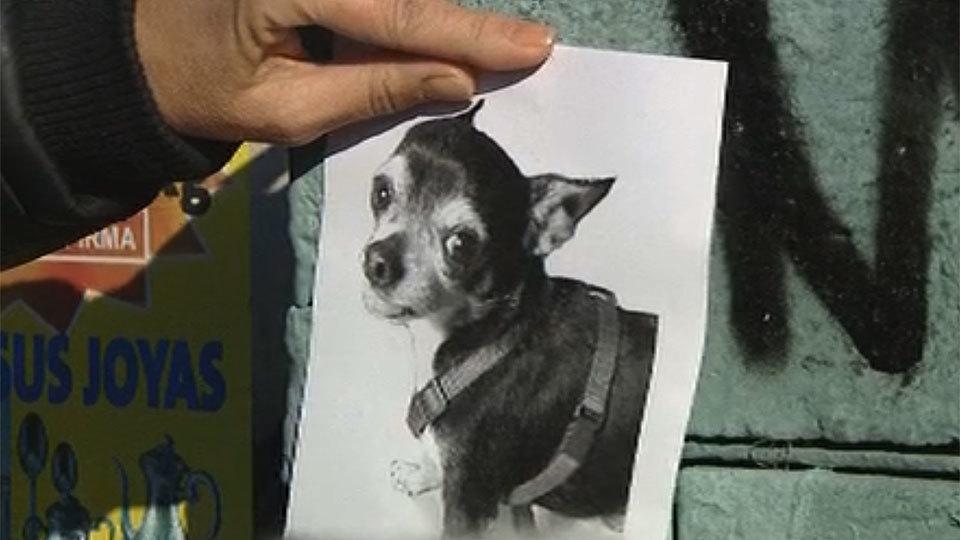 El robo de perros, un nuevo negocio