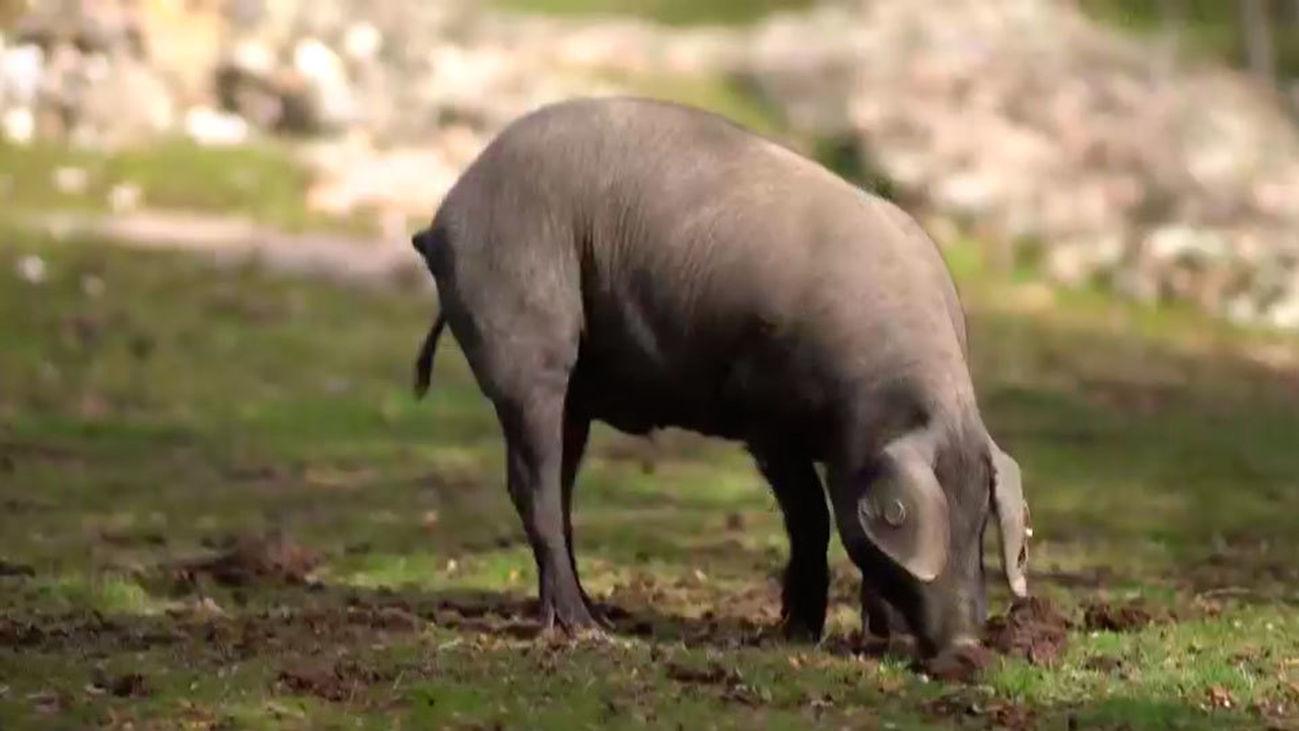 D Origen Madrid: Carne de cerdo y embutidos