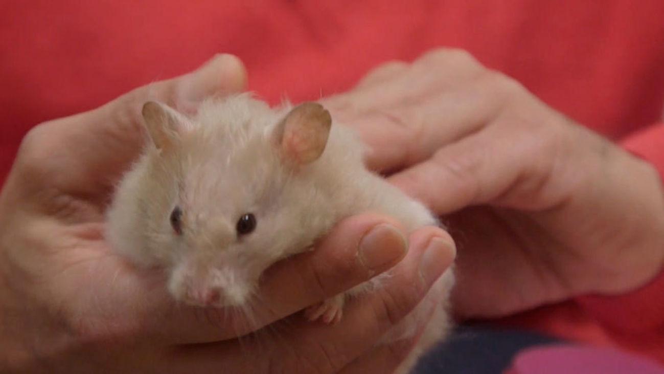 Animalia: A Bebé se le complica su neumonía