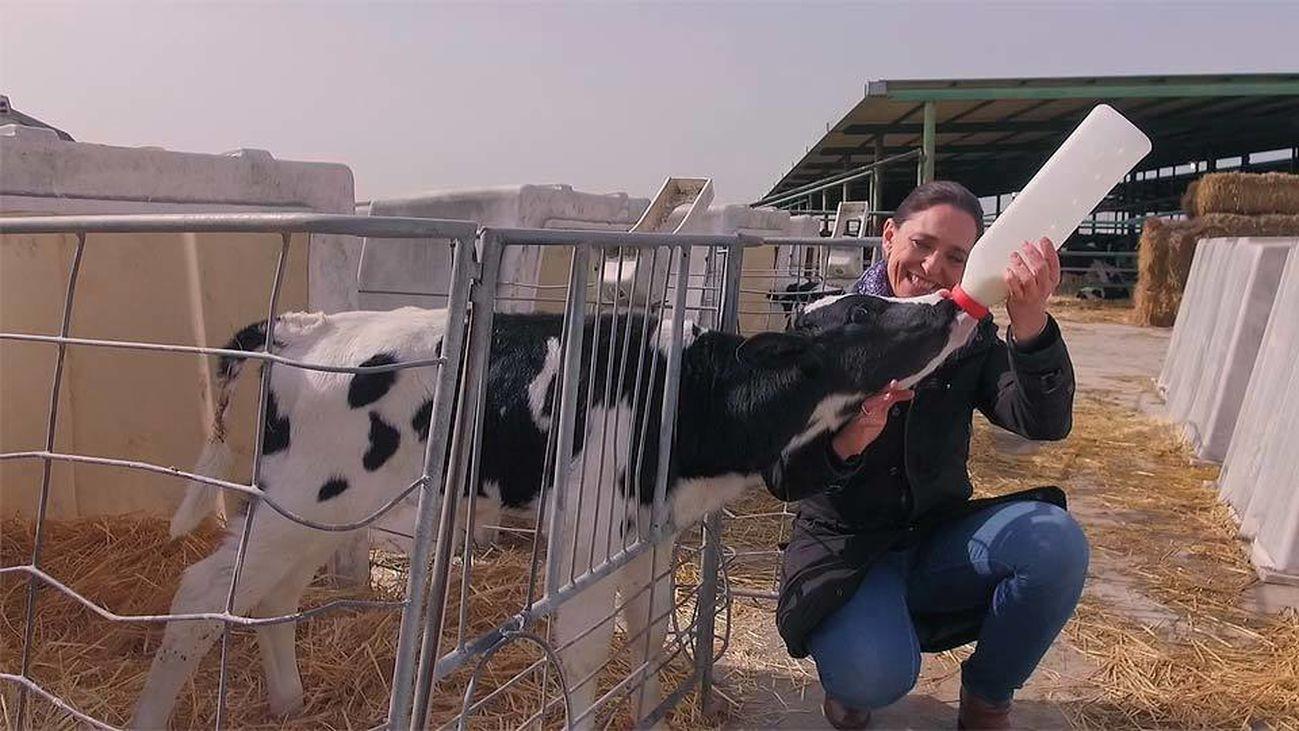 D Origen Madrid: Leche de vacas madrileñas