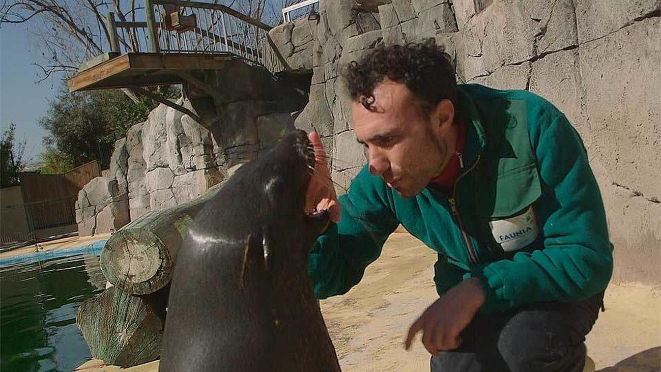 Animalia: Cómo se cuida a un oso marino