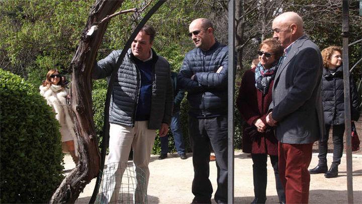 La Comunidad de Madrid dona 234 variedades de vides al Real Jardín Botánico