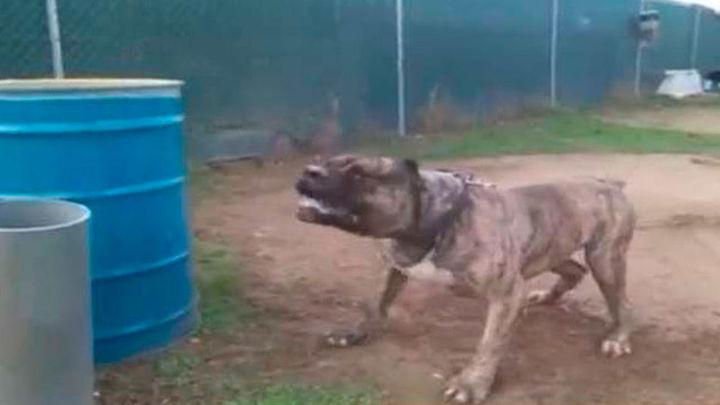 Un perro de presa ataca a una niña y a su madre en Colmenarejo