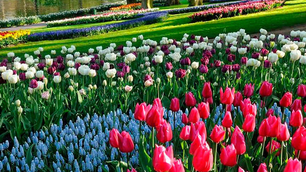 La mayor exposición de tulipanes del mundo