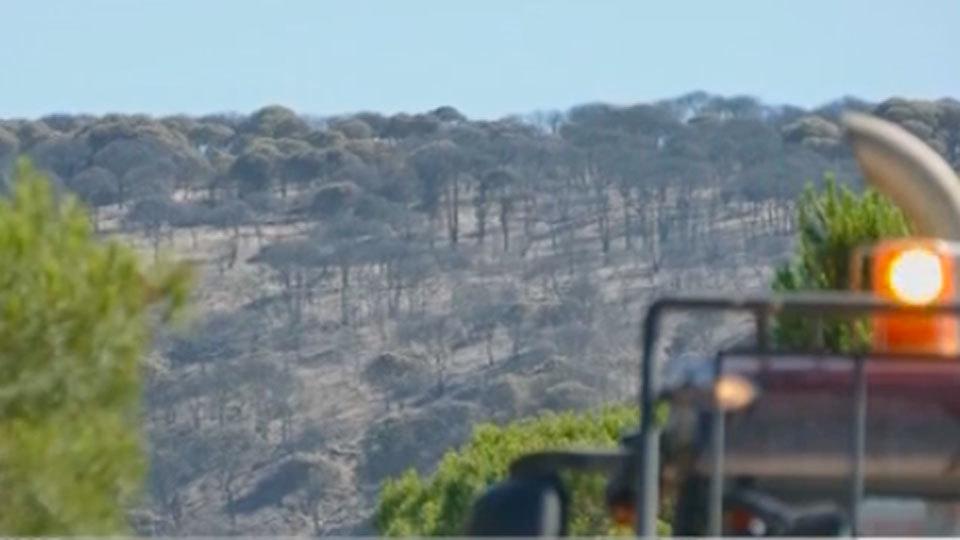 Estabilizado el incendio de Moguer