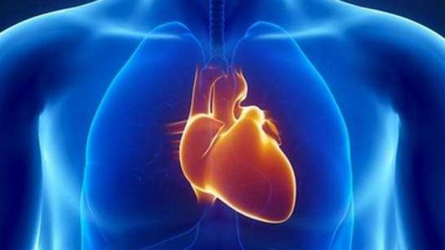Descubren por qué el corazón está en el lado izquierdo del cuerpo ...
