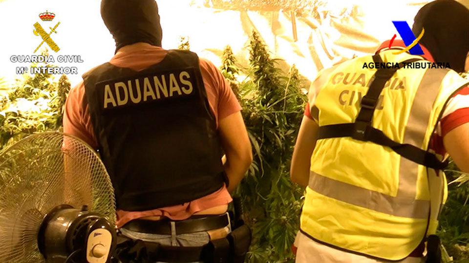 Desarticulada en Granada una banda criminal dedicada al tráfico de marihuana