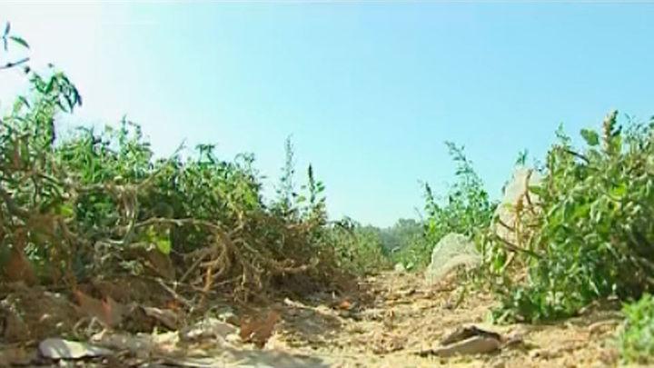 Cortado el riego a los agricultores de la Vega del Tajo por la sequía