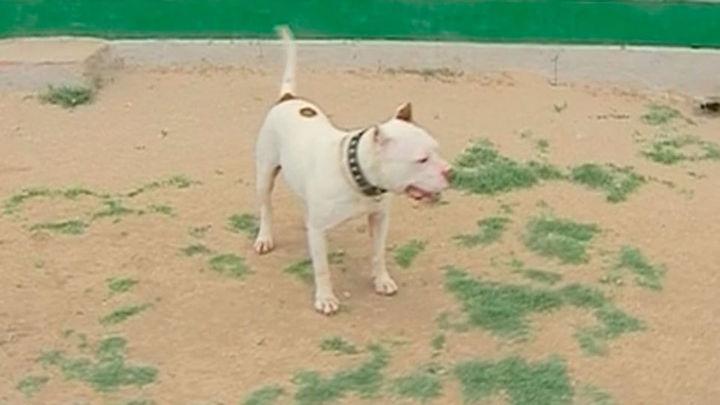 Un hombre grave tras ser atacado por perros peligrosos en Morata de Tajuña
