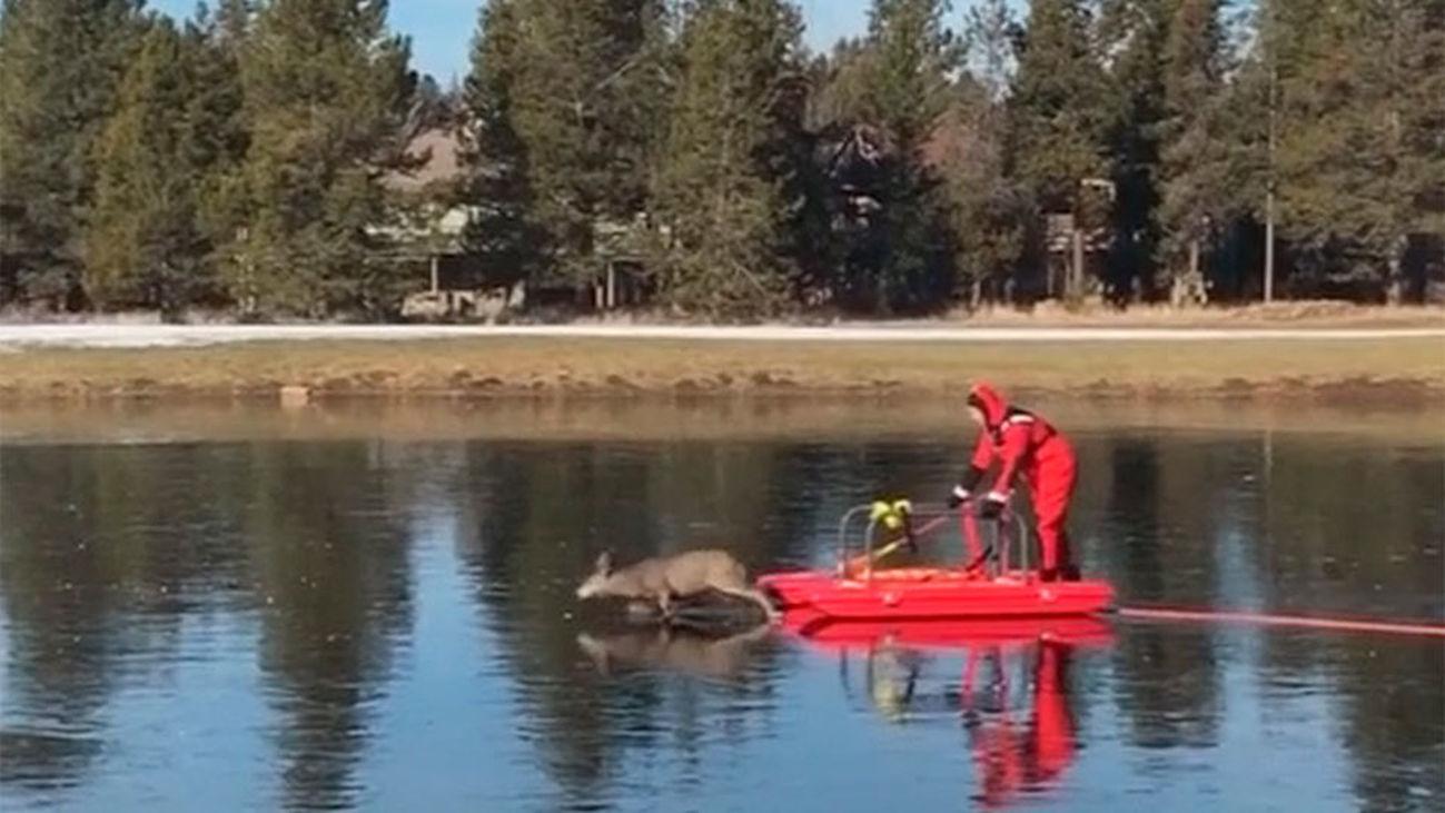 Rescatan con un trineo a un ciervo atrapado en un lago helado en Oregón