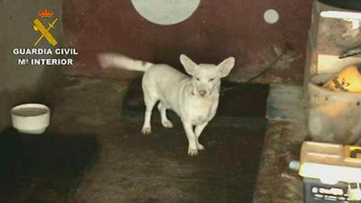 La Guardia Civil recupera 57 perros de un criadero ilegal en Cenicientos