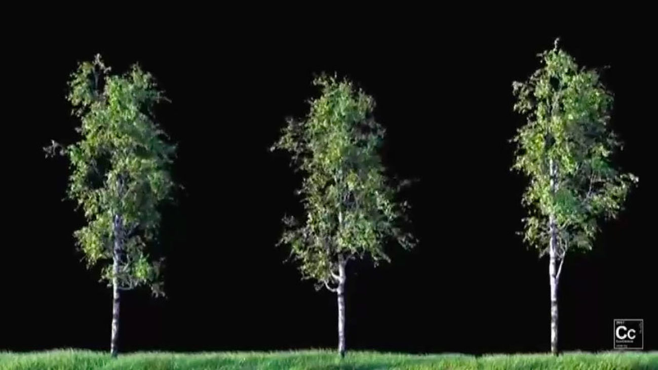 Crece la superficie verde, pero la situación no mejora