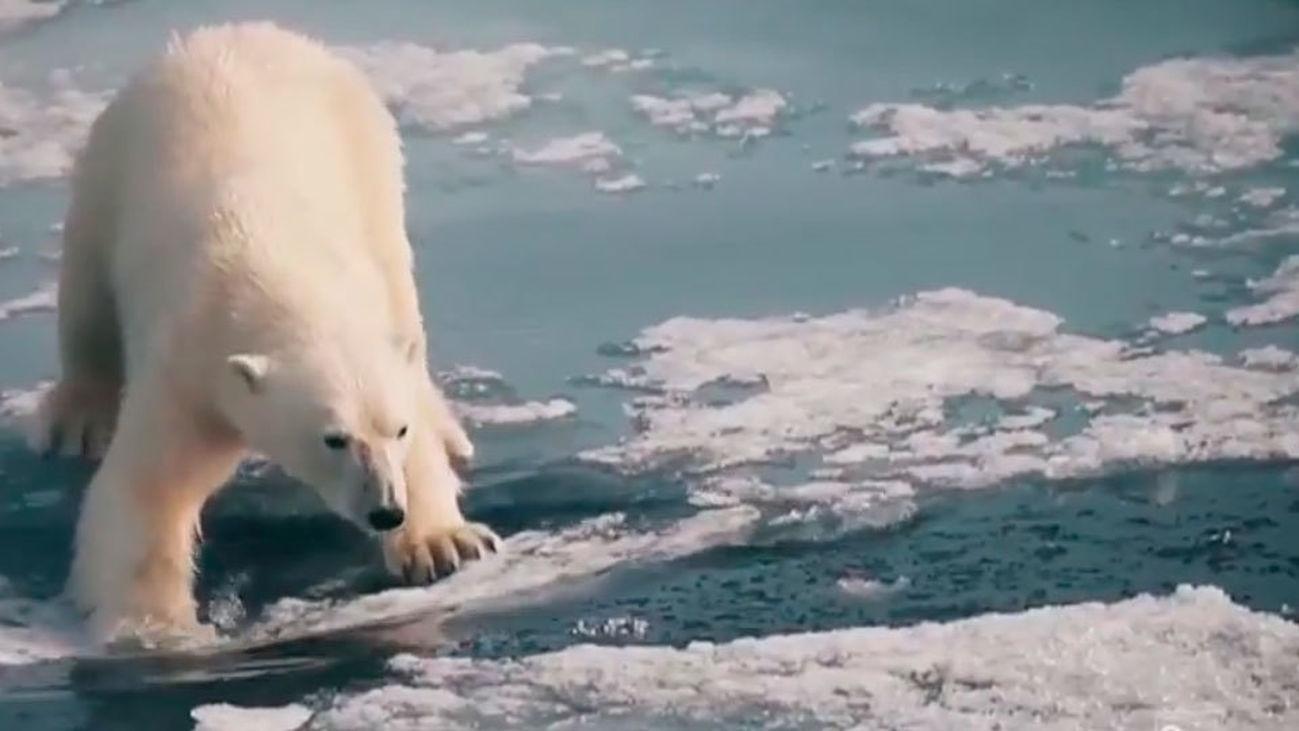 ¿Cómo afecta a los animales el Cambio Climático?