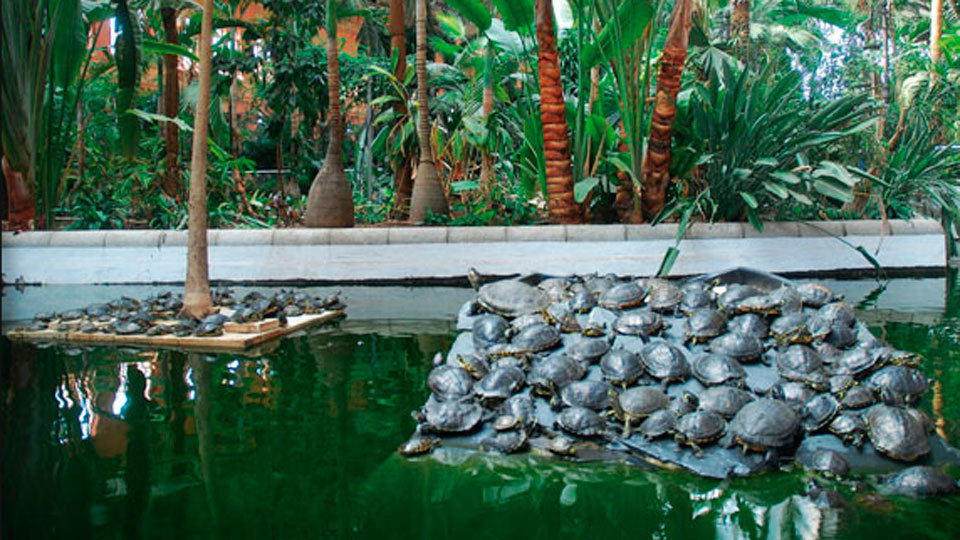 """Trasladan a las tortugas """"abandonadas"""" de Atocha a un centro en Navas del Rey"""