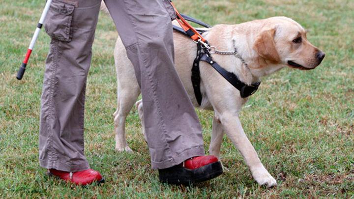 Campaña para proteger a los perros guía de las consecuencias del botellón
