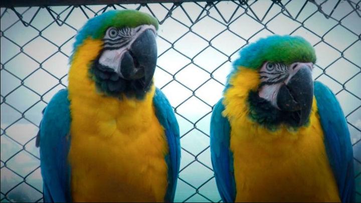 El Gobierno aprueba un plan contra el tráfico ilegal de especies animales y vegetales