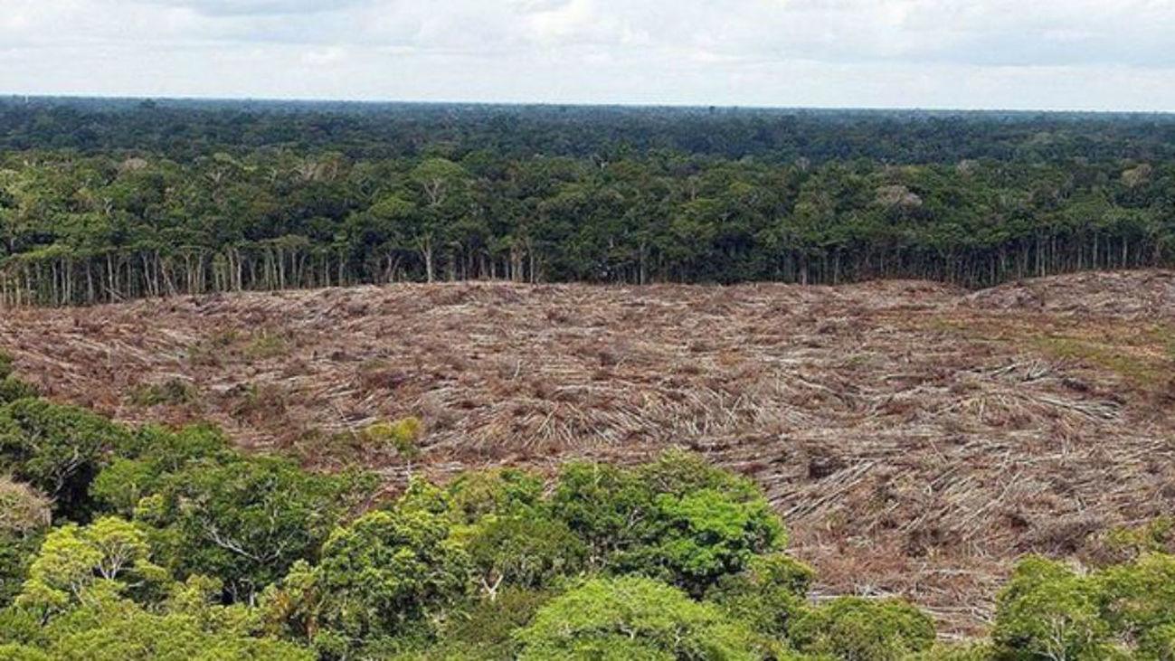 Advierten que la deforestación de la Amazonia se acerca a punto de no retorno