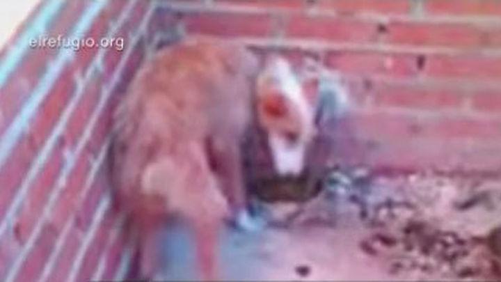 Año y medio de cárcel para el maltratador de 55 perros en Villa del Prado