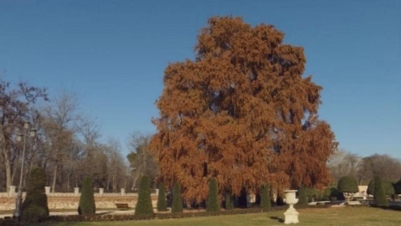 Visita a los orígenes del Parque de El Retiro