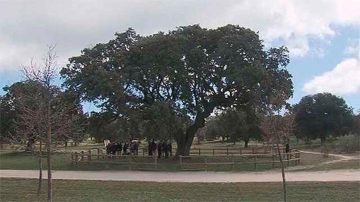 La Comunidad de Madrid crea un banco genético  para clonar árboles singulares