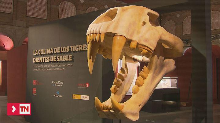 El Museo Arqueológico Regional duplicará su espacio
