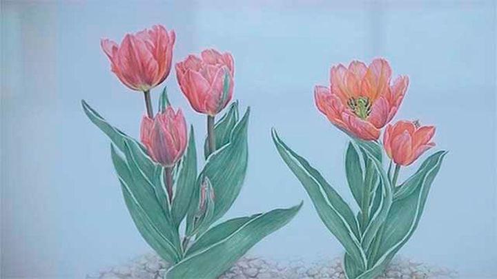 """""""Tulipa, tulipae. El arte ilustrado"""", en el Real Jardín Botánico"""