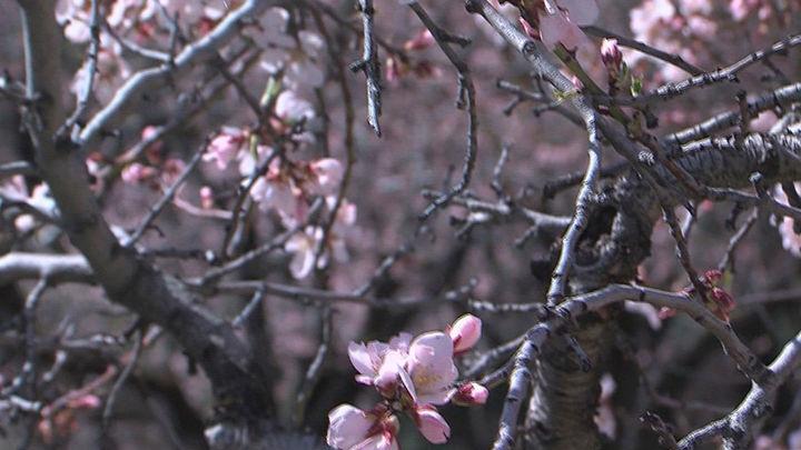 El parque de la Quinta de los Molinos abre tras una semana cerrado