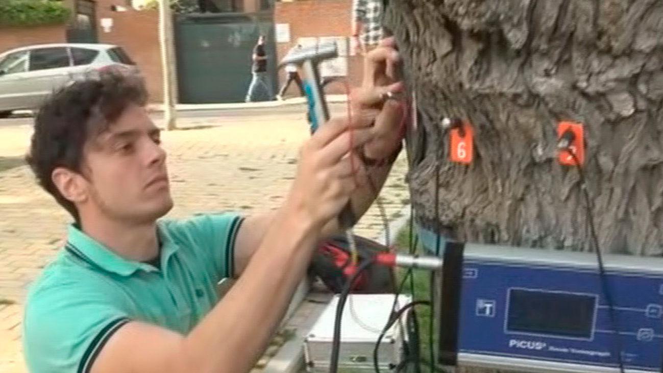 ¿Cómo se sabe si un árbol está enfermo?