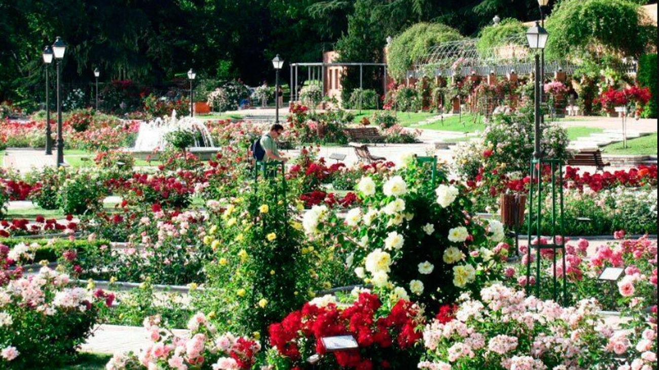 Carmena entrega los premios del 62º Concurso de Rosas Nuevas Villa de Madrid