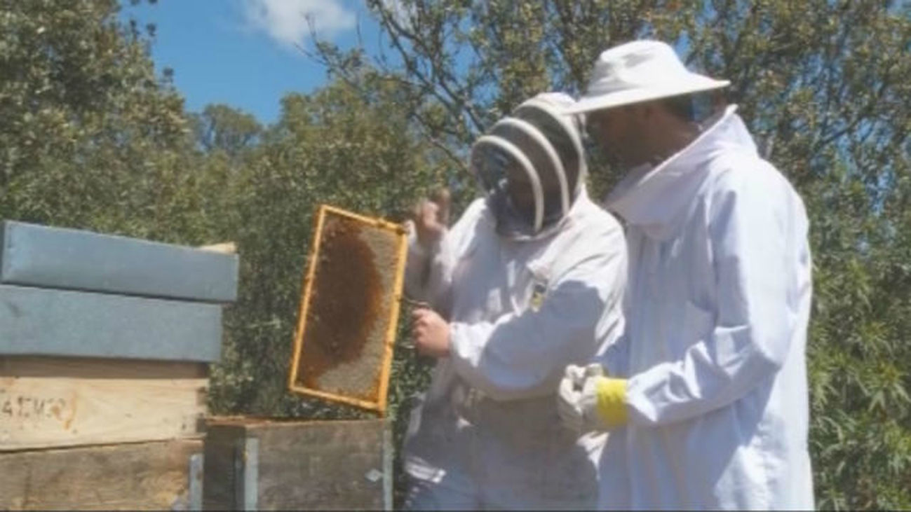 Recolectando miel en Torrelaguna