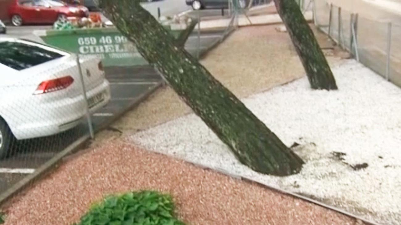 Varios árboles a punto de caerse en Ciudad Lineal