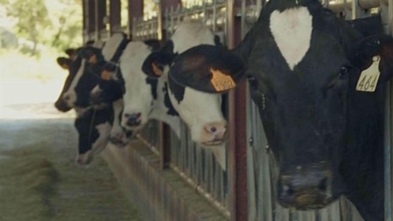 Tengo una vaca lechera, no es una vaca cualquiera