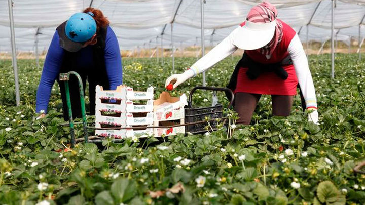 Nuevas denuncias por posible abuso laboral y sexual a temporeras de la fresa en Huelva