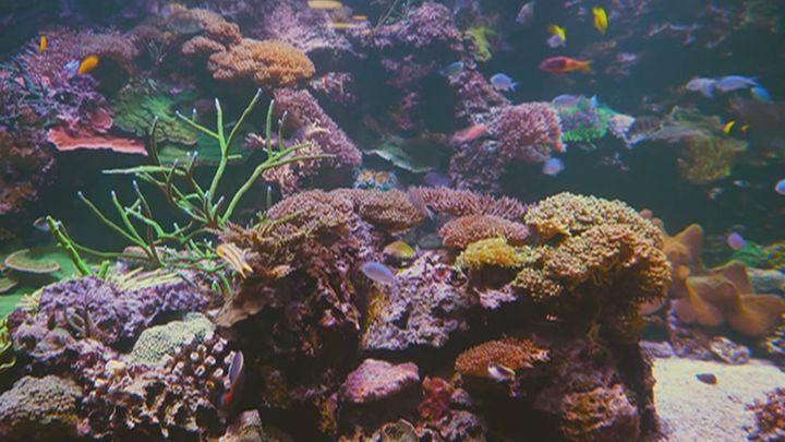 Los océanos se mueren y empezamos a comer plástico