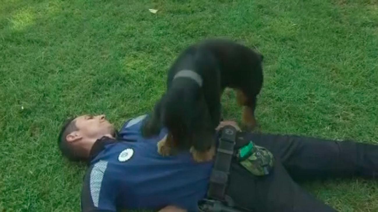 Poncho, el perro que realiza una reanimación cardiaca