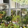 Un hospital de plantas en Pozuelo de Alarcón