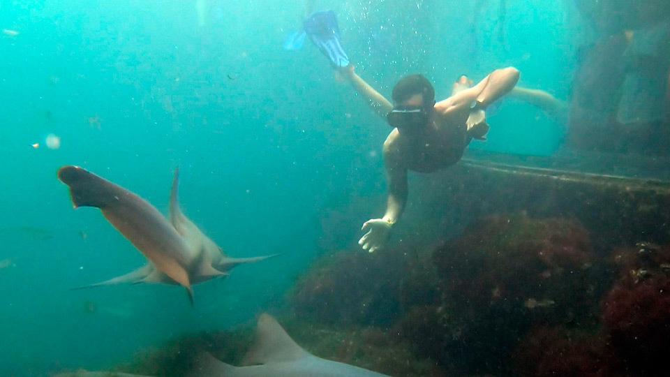 Nadamos con tiburones en el Parque Xcaret