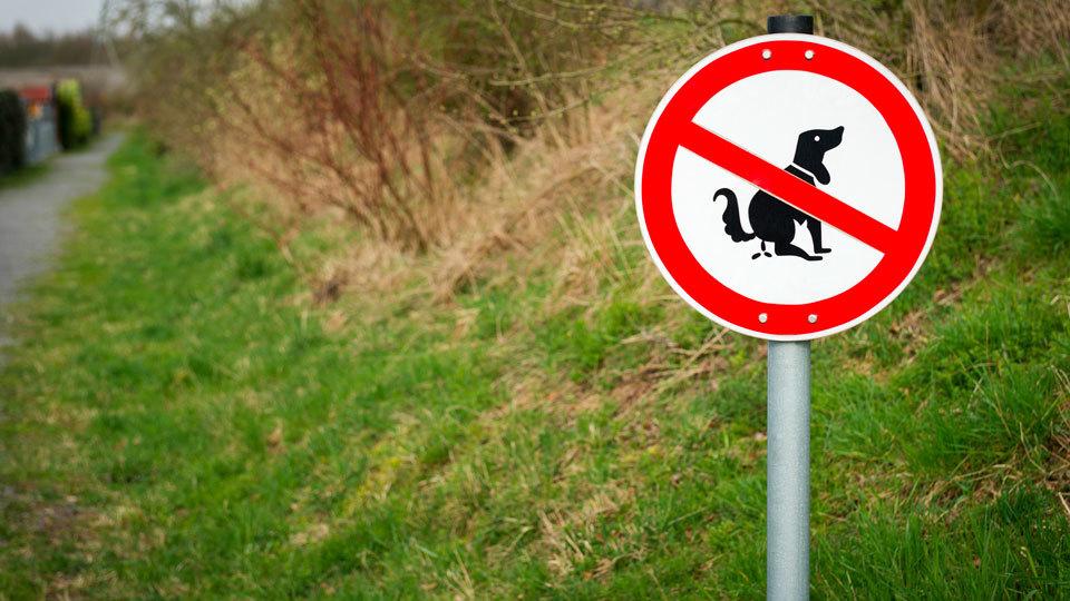 Pipi-Clean, la propuesta de Sevilla la Nueva para limpiar el pis de los perros