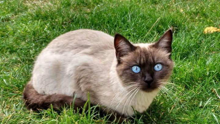 Plan de control de las colonias de gatos del Instituto Psiquiátrico José Germainde Leganés