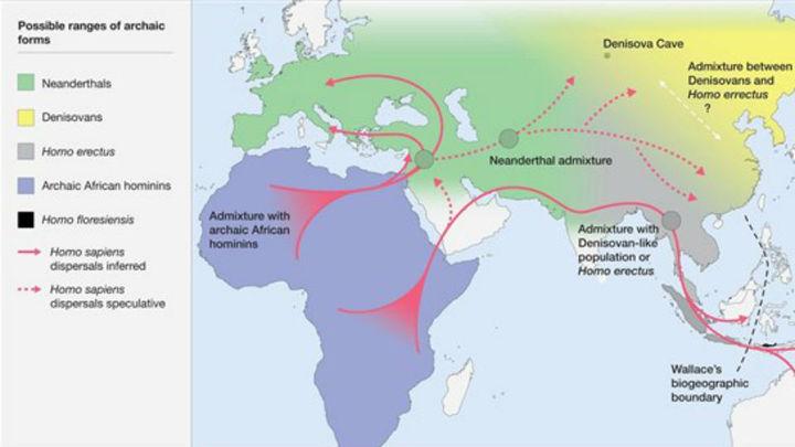 El Homo sapiens creó un nuevo nicho ecológico que hizo prevalecer a la especie humana actual