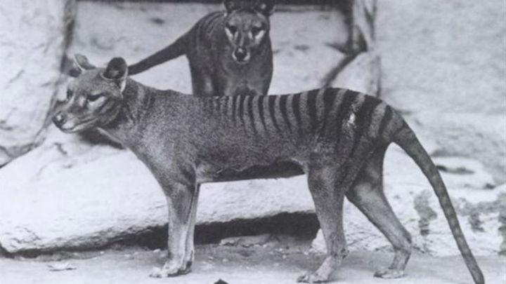 Primer atlas de mamíferos vivos y extinguidos por los humanos