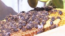 Retiran una colmena de abejas en un salón de bodas