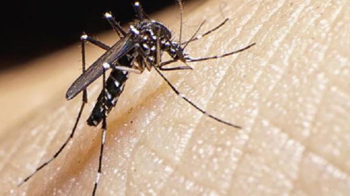 Confirmados dos casos de dengue contraído en España y un tercero, sospechoso en Madrid