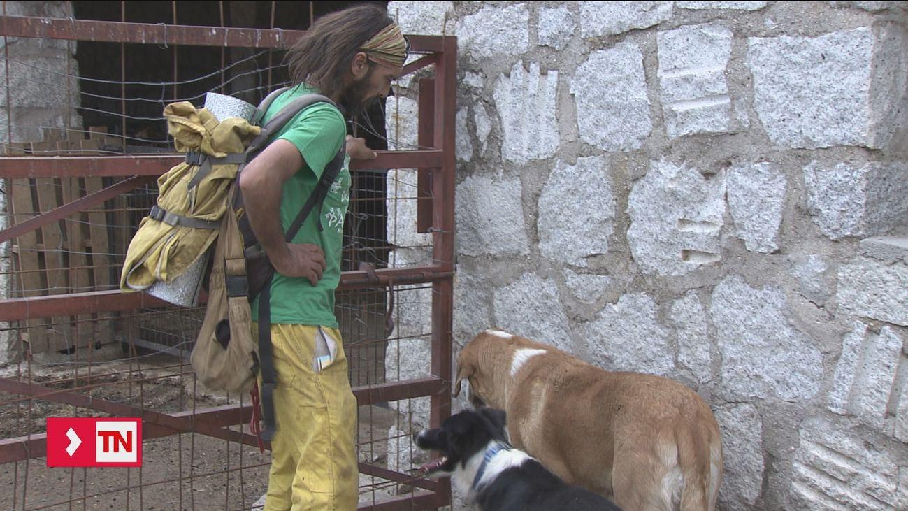 A favor de la convivencia entre pastores y lobos en la sierra madrileña